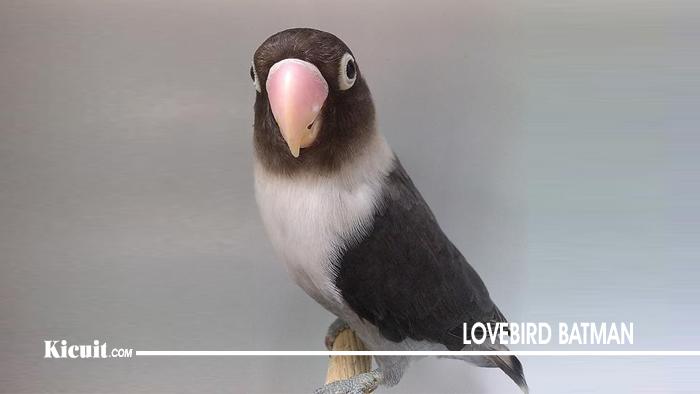 Lovebird Batman