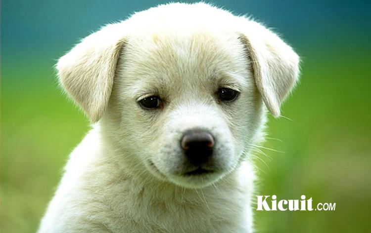 Tips Dan Cara Sederhana Merawat Anak Anjing