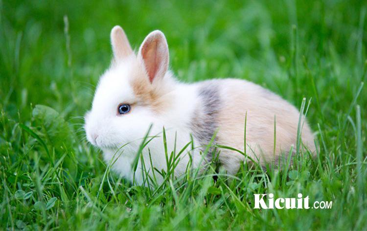 Jenis Jenis Kelinci yang Paling Populer