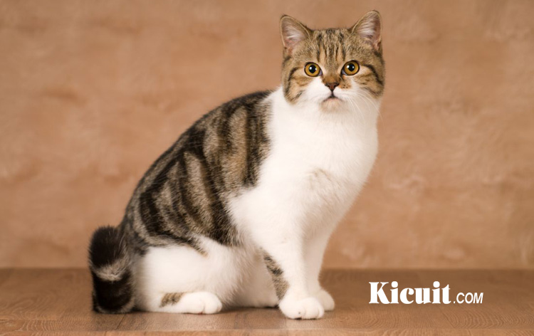 Kucing Menggemaskan Yang Biasa Di Pelihara Masyarakat Indonesia