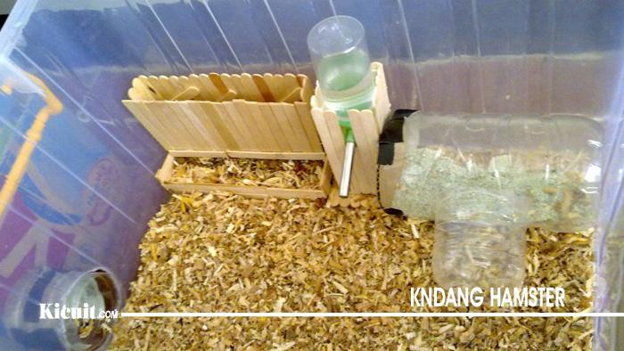 Hal lain yang wajib Anda penuhi adalah serbuk kayu untuk hamster. Serbuk ini biasanya disebar di dasar kandang hamster.