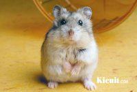 Perlengkapan Hamster Yang Wajib Anda Tahu!