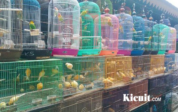 7 Hal Yang Harus Anda Perhatikan Sebelum Memelihara Burung