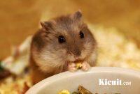 Tips Dan Trik Cara Memelihara Hamster