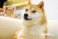 Anjing Page 3 Of 4 Kicuit Com