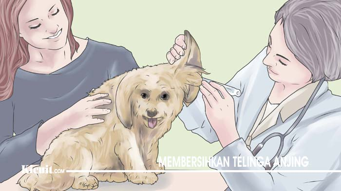 Membersihkan Telinga Anjing