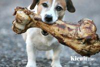 Memberikan Tulang Pada Anjing
