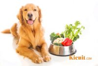 Tips Diet Sehat untuk Anjing