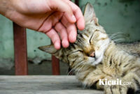Menjinakkan Kucing Liar