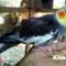 5 Cara Mudah Perawatan Burung Parkit Australia atau Cockatiel
